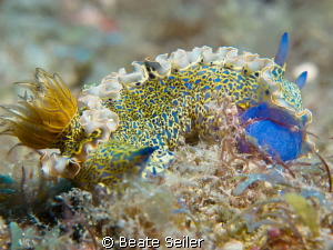 Nudi Beauty ! by Beate Seiler 